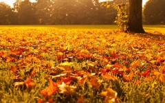 Five things to do in fall